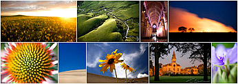 Collage of gallery images